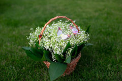 Lilies of the valley in basket. Beautiful basket of lilies of the valley is in the meadow Stock Photos