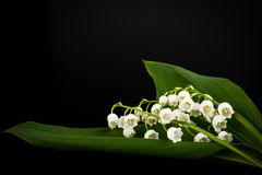 Lilies of the valley Stock Photo