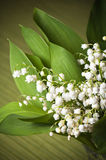 Lilies of the valley, close-up Stock Image
