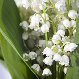 The Lilies of the valley closeup. Lilies of the valley closeup Royalty Free Stock Photography