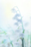 Lilies of the valley in fog Royalty Free Stock Image