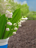 Lilies of the valley in glass Royalty Free Stock Images