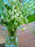 Lilies of the valley Royalty Free Stock Image