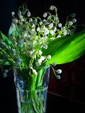 Lilies of the valley. Royalty Free Stock Photos