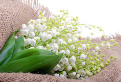 Lilies of the valley on the sacking Stock Photography