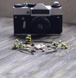lilies of the valley, shells and rertro camera royalty free stock images