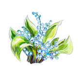 Lilies of the valley. Watercolor painting. Stock Image