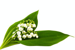 Lilies of the valley Royalty Free Stock Photo