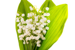 Lilies of the valley Royalty Free Stock Photography