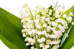 Lilies of the valley Royalty Free Stock Images