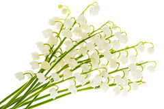 Lilies of the valley on a white background. Royalty Free Stock Photos