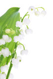 Lilies of the valley Stock Photos