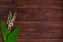 Lilies of the valley on wooden background, copy space Stock Photography