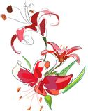 Lilies3 Stockfotos