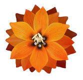 Lilis flower on a white background Stock Photos