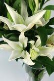 Lilium flowers on the white background Royalty Free Stock Photos