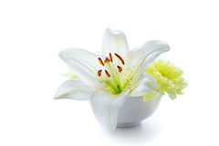 Liliy flower in a bowl Stock Photos