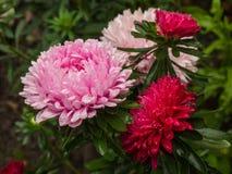 Lilja blommavit Royaltyfri Fotografi