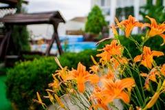 Lilja i sommar Sikten från fönstret royaltyfria foton