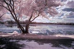Lilja Lake Royaltyfria Bilder