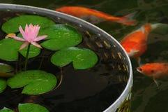 Lilja och fisk Arkivbild