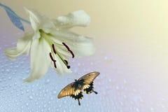 Lilja och flygfjäril Royaltyfri Fotografi