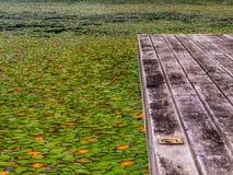 Liljablock på vattnet Royaltyfria Bilder