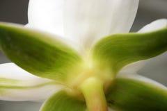 liljalotusblommavatten Royaltyfri Bild