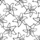 Liljamodell Arkivbild
