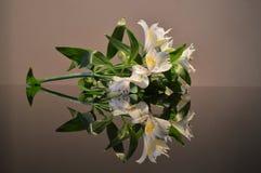 Liljan blommar på ett mörkt exponeringsglas royaltyfri foto