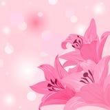 Liljan färgar Arkivbilder