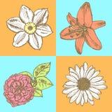 Liljan tusensköna och steg, pingstliljan skissar, den sömlösa modellen Arkivbild