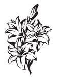 liljar royaltyfri illustrationer
