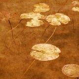 liljavatten Arkivbild