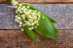 Liljekonvalj eller kunna-lilja arkivfoto