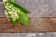 Liljekonvalj eller kunna-lilja arkivfoton