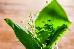 Liljekonvalj eller kunna-lilja royaltyfri bild