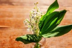 Liljekonvalj eller kunna-lilja arkivbild