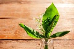 Liljekonvalj eller kunna-lilja royaltyfri fotografi