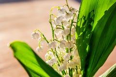 Liljekonvalj eller kunna-lilja arkivbilder