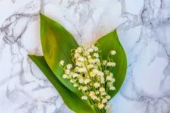 Liljekonvalj eller kunna-lilja på marmorbakgrund fotografering för bildbyråer