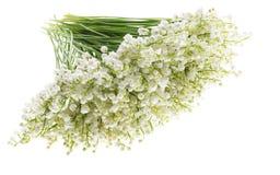 Liljekonvalj på isolerad vit bakgrund Romantisk bouque Fotografering för Bildbyråer