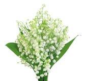 Liljekonvalj som isoleras på vit Royaltyfri Bild
