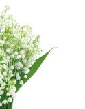 Liljekonvalj som isoleras på vit Royaltyfri Fotografi