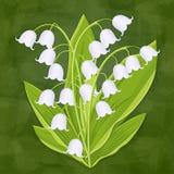 Liljekonvalj vårbukett av den delikata blomman, vektorillustration Vita blåklockor, stjälk och sidor för knoppskogblommor vektor illustrationer