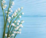 Liljekonvaljen på den dekorativa blom- våren för blå träberöm blommar hälsningar Royaltyfria Bilder