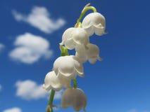 Liljekonvaljer i himlen Arkivfoto