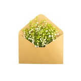 Liljekonvaljer i kuvertet som isoleras på vit Royaltyfri Fotografi
