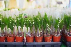 Liljekonvaljer på franskablommamarknad i Paris Arkivfoton
