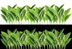 Liljekonvaljkant Royaltyfri Fotografi